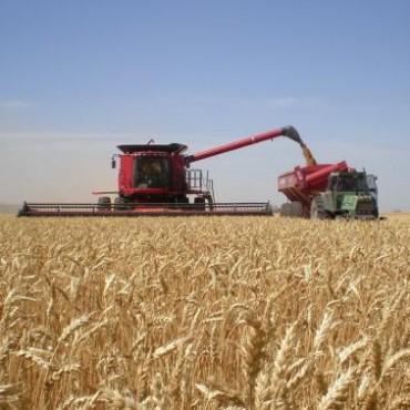 Agroalimentos: sin techo para incorporar tecnología
